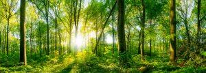 Lichtung im Wald bei Sonnenuntergang